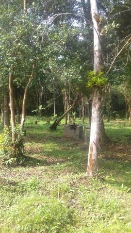 Chacrinha em Guaraqueçaba - Foto 3