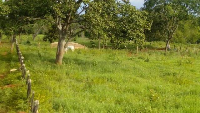 Fazenda Ribeirão - Foto 4