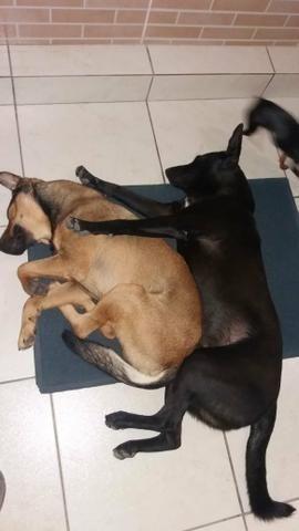 Doace urgente cachorro grande macho - Foto 4