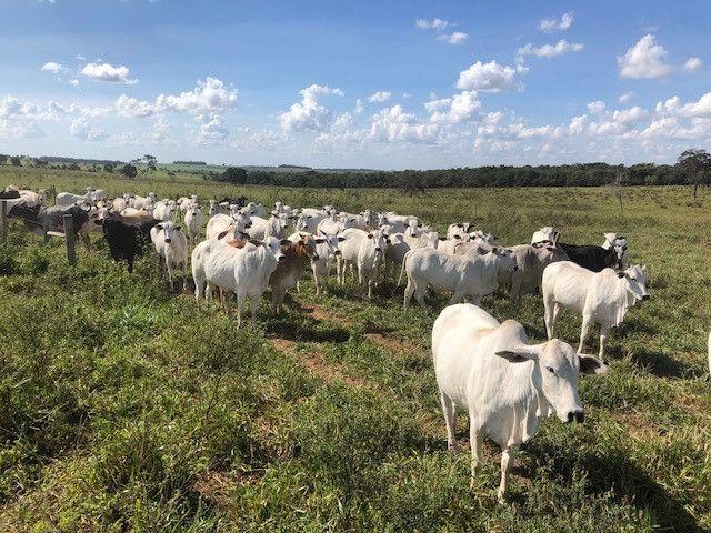 Fazenda de Pecuária 917 hectares - Foto 6