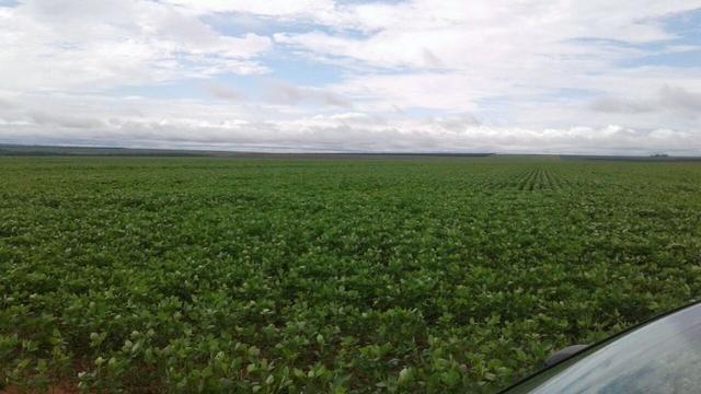 Arrendamento de fazenda em MT, uma com 1800 hectares e outra com 2700