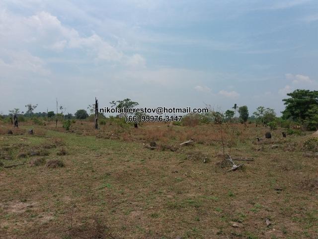 Fazenda 125 hectares nordeste mt nikolaiimoveis