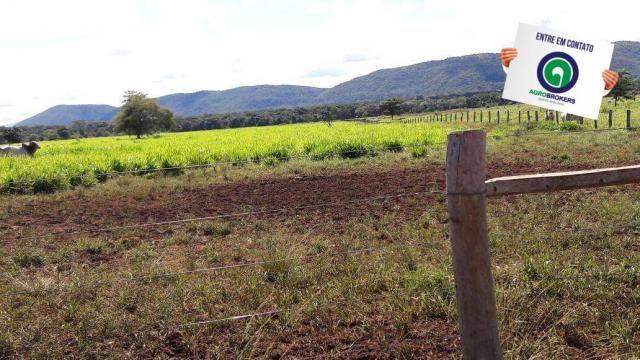 Fazenda 1.650 ha sentido caceres - Foto 3
