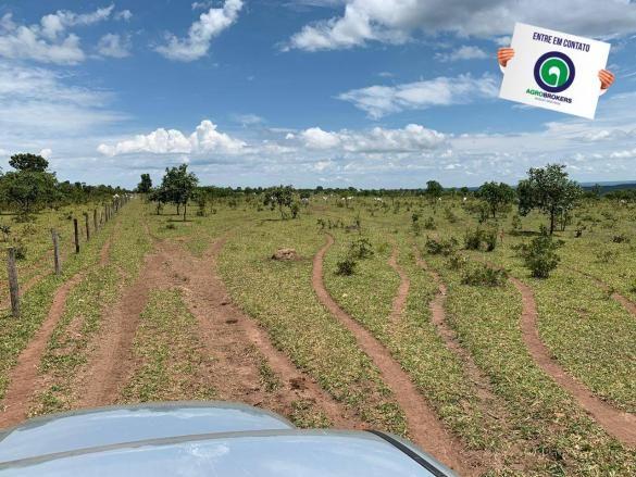 Fazenda 100 ha região de bom jardim - Foto 5