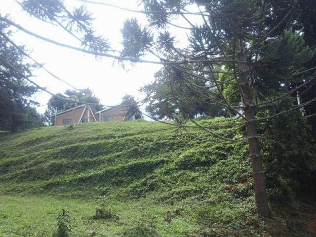 Fazenda para Venda em Carvalhos, Rural - Foto 9
