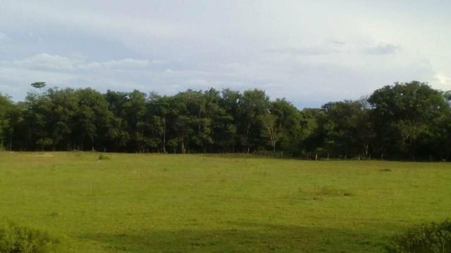 Fazenda Ribeirão - Foto 10