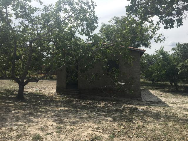 Sítio com casa em Monsenhor Gil - Foto 6