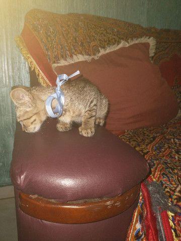 Gatinho para adoção - Foto 4