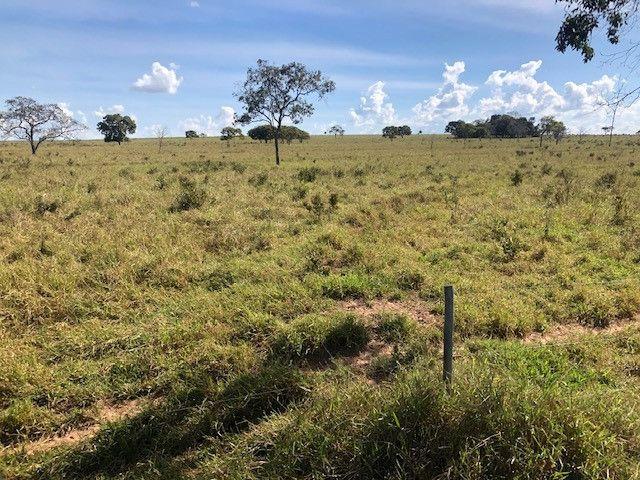 Fazenda de Pecuária 917 hectares - Foto 5