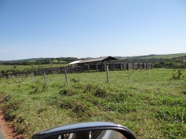 Fazenda de Pecuária 917 hectares - Foto 17