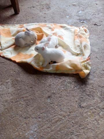 Vendo estes coelhos
