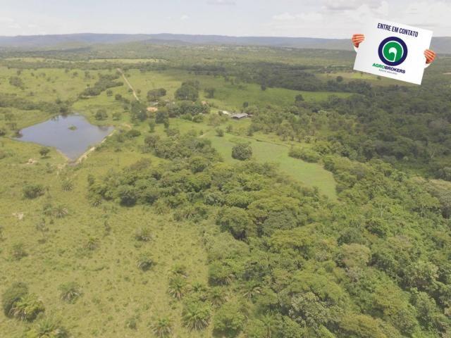 Fazenda 162 ha região de acorizal - mt - Foto 6