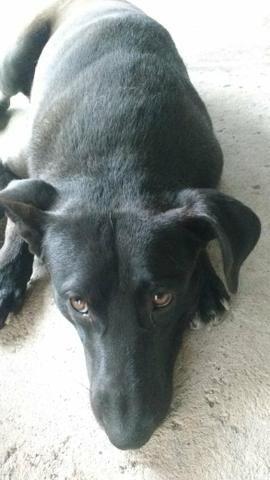 Doace urgente cachorro grande macho - Foto 2