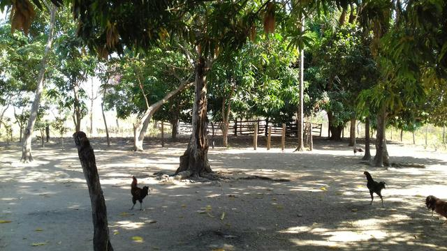 Vendo uma terra pertinho do arraia 13 alqueiro - Foto 7