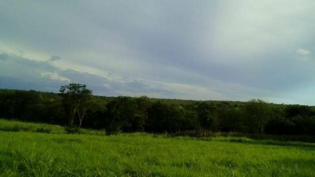 Fazenda Ribeirão - Foto 13