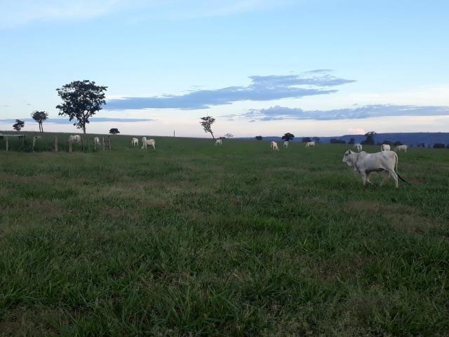 Fazenda Guiratinga MT 6.080 Ha - Foto 13