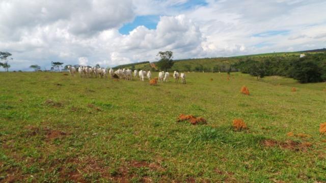 Sítio 22 hectares em Planalmira - Foto 11