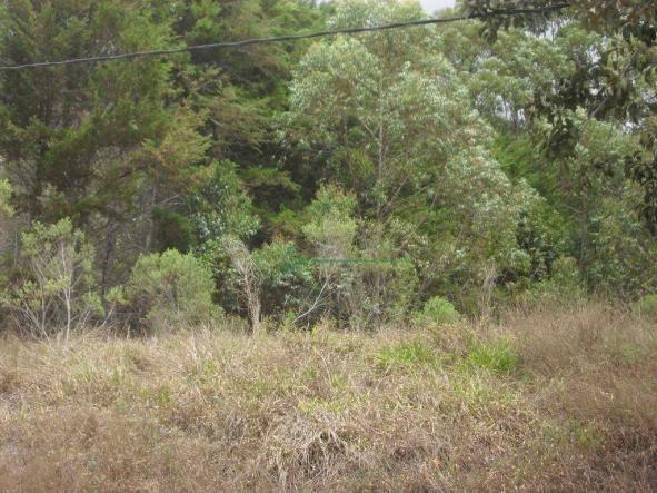Terreno à venda, 2241 m² por R$ 80.000,00 - Vieira - Teresópolis/RJ - Foto 8