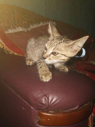 Gatinho para adoção - Foto 2