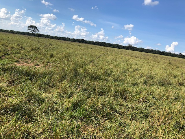 Fazenda de Pecuária 917 hectares - Foto 4