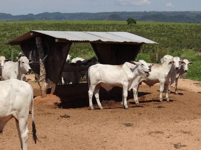 Fazenda de Pecuária 917 hectares - Foto 14