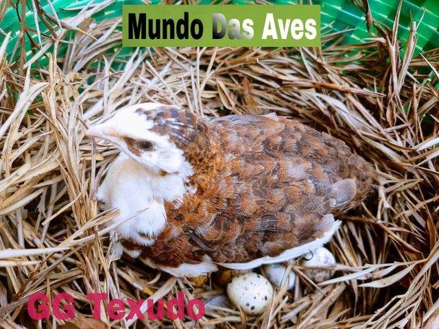Mundo Das Aves - Foto 5