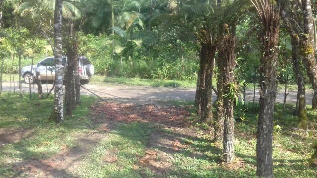 Chacrinha em Guaraqueçaba - Foto 5