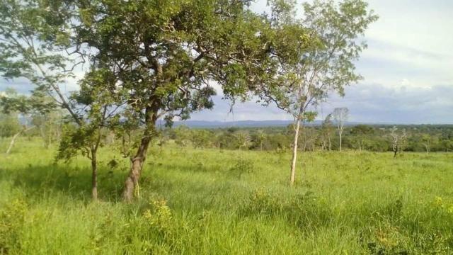 Fazenda Ribeirão - Foto 2