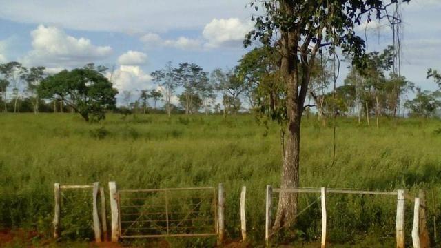 Fazenda Ribeirão - Foto 7