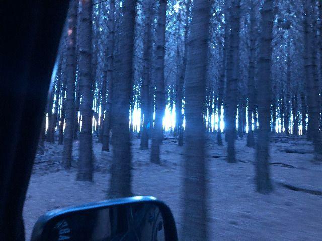 Pinus taeda 15 anos - Foto 4