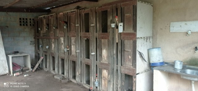 Passeadores frentes de gaiolas viveiros galos canil