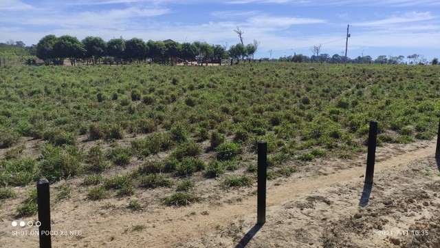Vende-se Fazenda à 49 km de Porto Velho área com 115 hectares  - Foto 7
