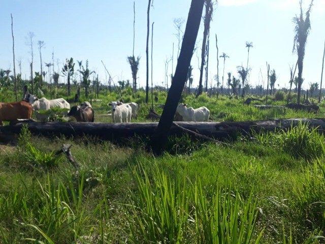 Vende-se Fazenda à 49 km de Porto Velho área com 115 hectares  - Foto 4