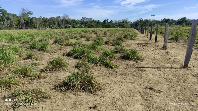 Vende-se Fazenda à 49 km de Porto Velho área com 115 hectares  - Foto 6
