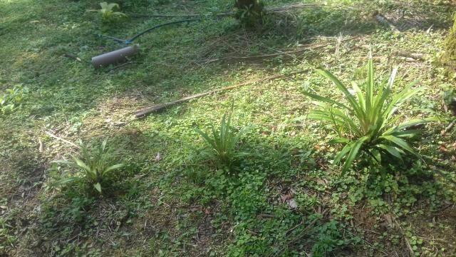 Chacrinha em Guaraqueçaba - Foto 6