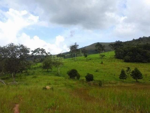 Fazenda para Venda em Carvalhos, Rural - Foto 7