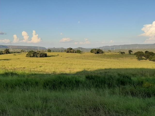 Fazenda Guiratinga MT 6.080 Ha - Foto 10