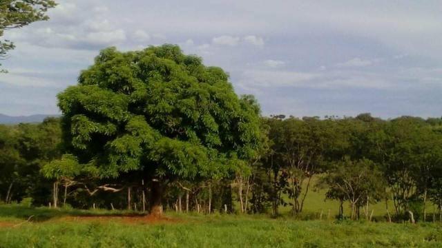 Fazenda Ribeirão - Foto 12