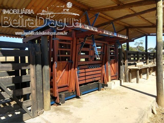 Fazenda Pecuaria 322 Hectares Plana - Foto 7