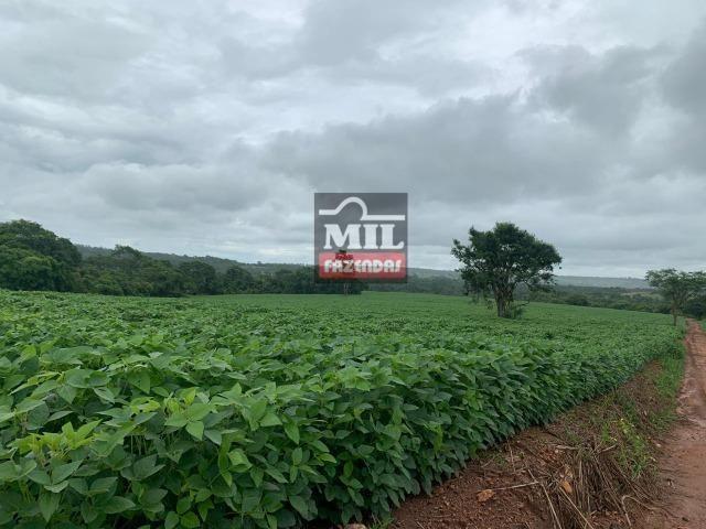 Área irrigada ( pivo central ) Fazenda 68 alqueires ( 333 hectares ) Morrinhos-GO - Foto 4