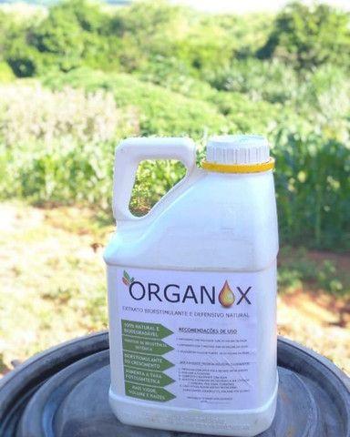 Organox