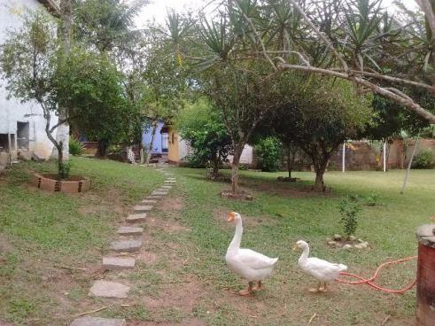 Sitio em guapimirim - Foto 9