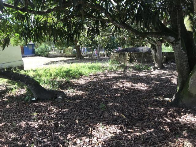 Granja, sítio, fazenda em Igarassu, 4 hectares com bastante benfeitorias! - Foto 13