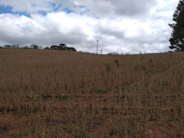REF 2407 - Chácara com 3.000m² - Excelente formar chácara Serrinha - Contenda/PR - Foto 13