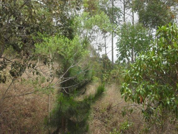 Terreno à venda, 2241 m² por R$ 80.000,00 - Vieira - Teresópolis/RJ - Foto 9
