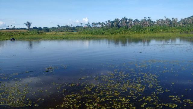 Vendo piscicultura/balneário - Foto 13