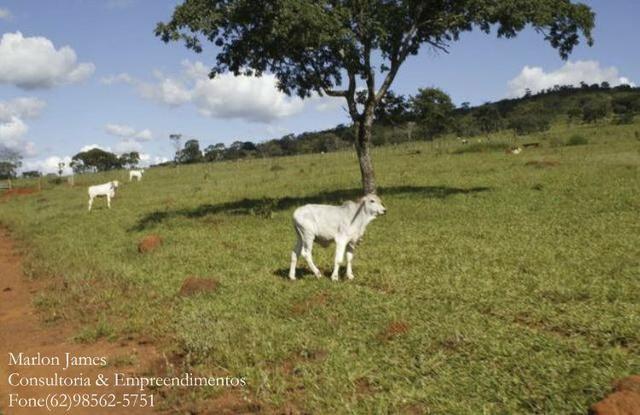 Fazenda em Cocalzinho-G! - Foto 3