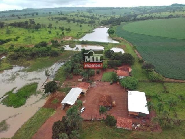 Área irrigada ( pivo central ) Fazenda 68 alqueires ( 333 hectares ) Morrinhos-GO - Foto 3
