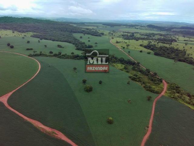Área irrigada ( pivo central ) Fazenda 68 alqueires ( 333 hectares ) Morrinhos-GO - Foto 8