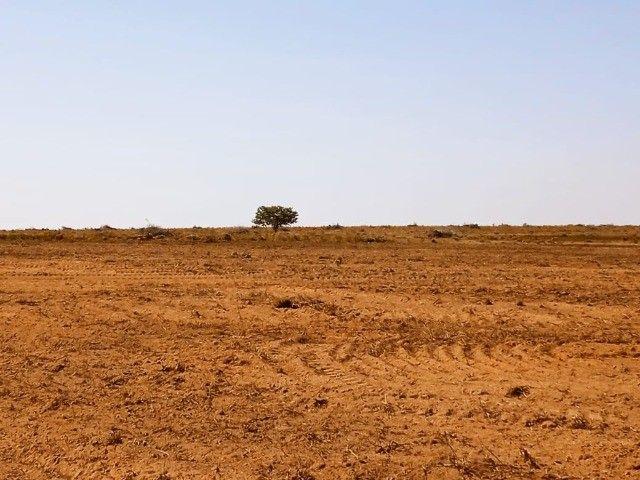Fazenda Oportunidade de investimento  - Foto 6